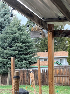 Squirrel laying down on a beam of a patio covering
