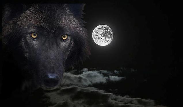 white wolf a black