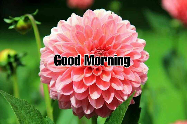 beautiful good morning with nature pink flower