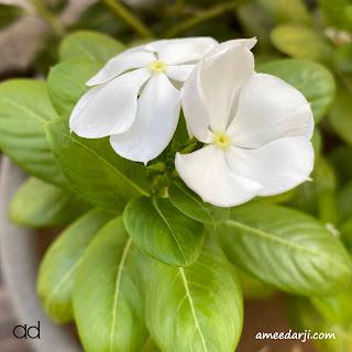 ad, ameedarji, PositiveChange, Positivity, Peace, Happiness, Relationship, ShortStory, Story, GujaratiStory, GujaratiShortStory,