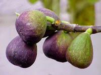 7 The Unique Benefits Of Fig