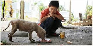 gambar budak baik hati merawat haiwan terbiar