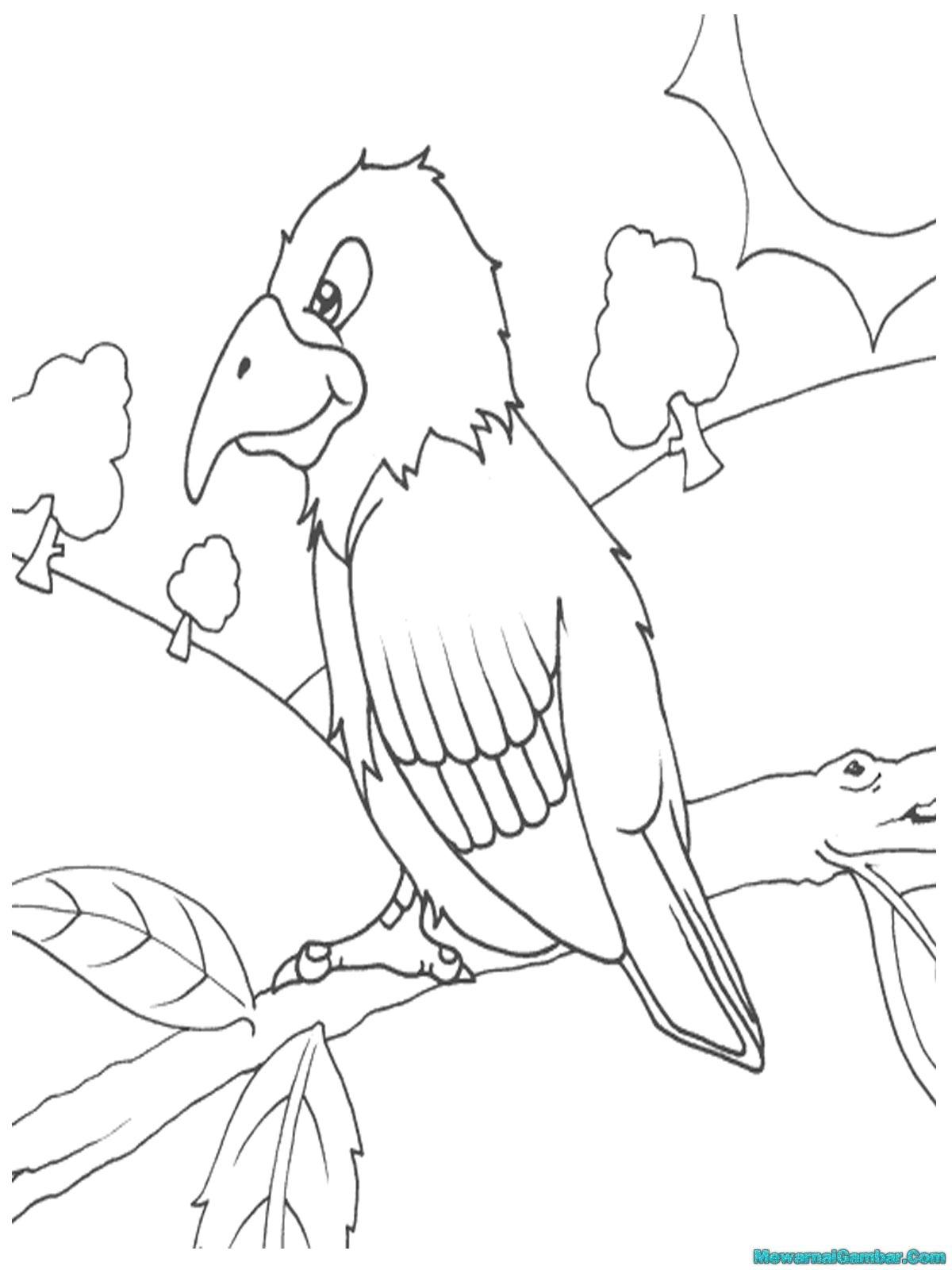 Download 15 Gambar Burung Untuk Diwarnai Mewarnai Gambar Download