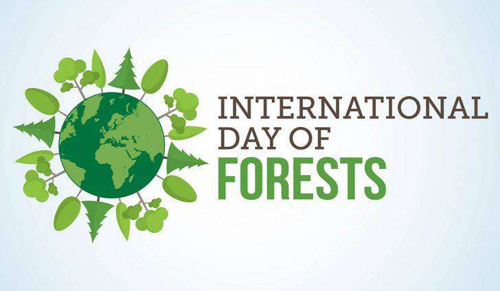 International Day of Forests Wishes Lovely Pics
