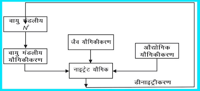 11 class Geography Notes In Hindi Chapter 15 Life on