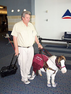 A miniature horse guiding its partner through the airport.