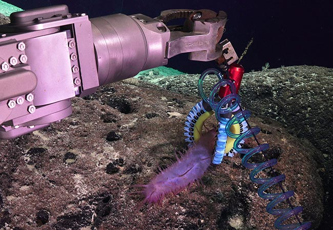 Penelitian Custom 3D-printed soft robotic for the investigation of deep-sea organisms