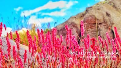 Deosai plains,Deosai Flora And Fauna In pictures,Gilgit Baltistan