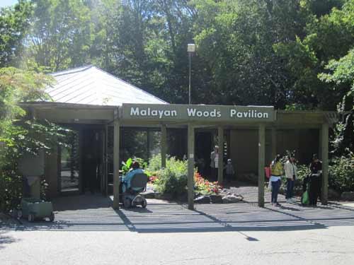 Malayan Woods Pavilion