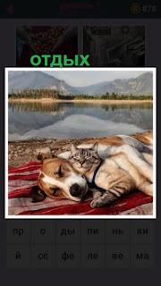 на берегу на пледе лежит собака и отдыхает с закрытыми глазами