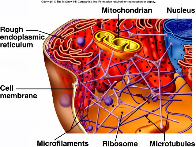 Mikrofilamentti