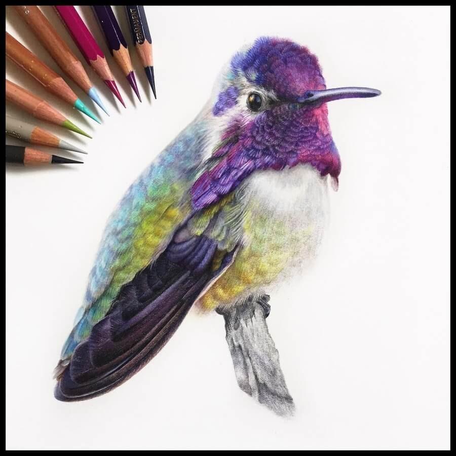 08-Hummingbird-Cristina-Simon-www-designstack-co