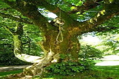 شجرة المعروف