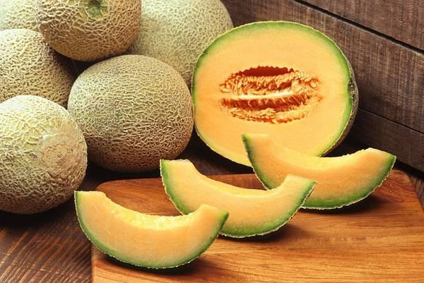 Melon : un allié de notre ligne