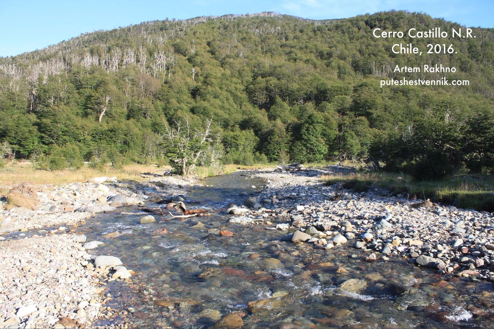 Лес и прозрачная река в Чили
