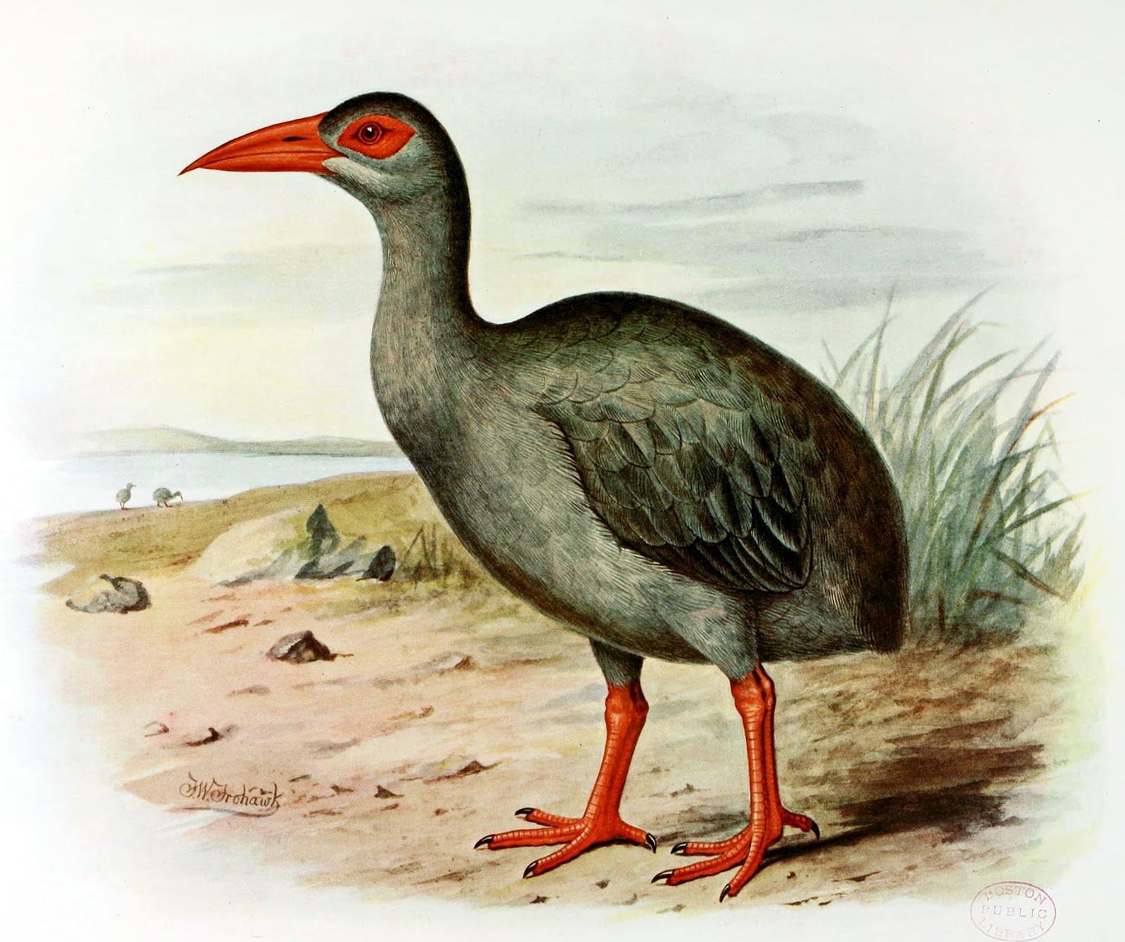 List of recently extinct bird species