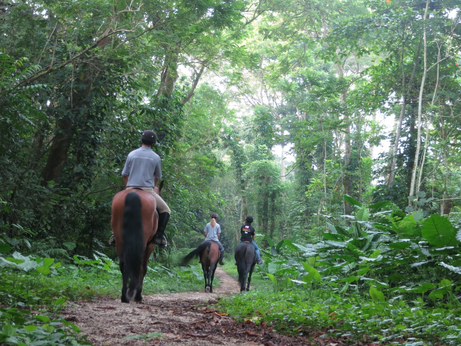 Singapore Polo Club riders taking their horses for a trot through Bukit Brown