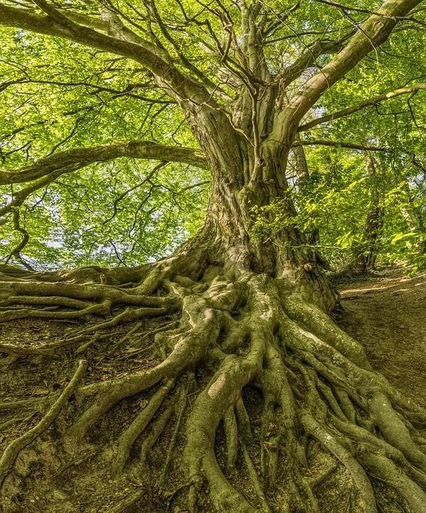 Pueden las raíces salvar el mundo
