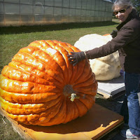 Sam Mazza Giant Pumpkin Weigh-in- Halloween New England