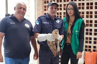 http://vnoticia.com.br/noticia/4006-coruja-resgatada-em-residencia-de-guaxindiba-e-solta-na-estacao-ecologica