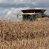 Economia| Produção de milho em MT deve ser de mais de 30 milhões de toneladas, segundo Conab