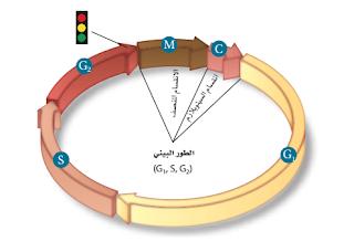 حل أسئلة اختبار مقنن الفصل السادس ( التكاثر الخلوي )