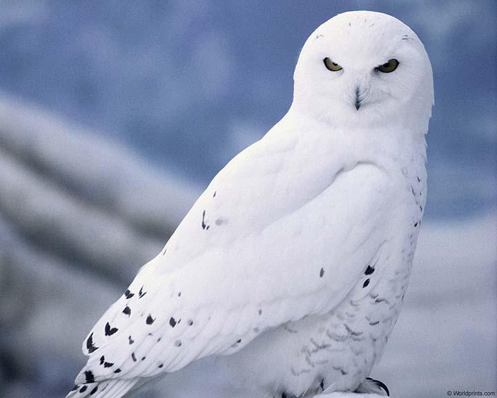 kış resimleri hayvanlarla
