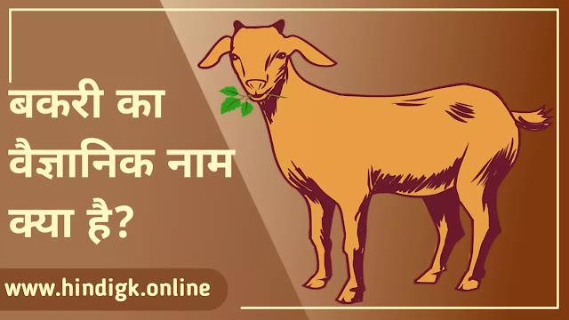 बकरी का वैज्ञानिक नाम क्या है (Bakri Ka Vaigyanik Naam)