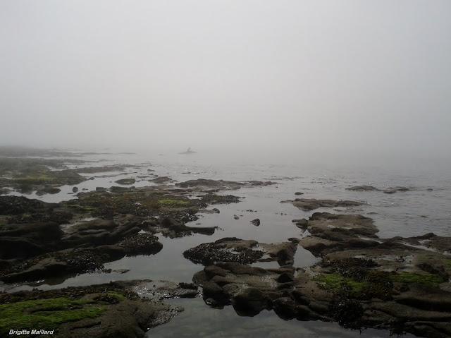 Des pas dans la brume, Photographies Brigitte Maillard