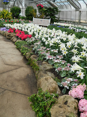 Centennial Park Conservatory 2018 Easter Flower Show Massed Florist Hydrangeas and Easter Lilies by garden muses-not another Toronto gardening blog