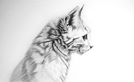 Ratgeber Katalog Katzen Zeichnen Lernen So Geht S