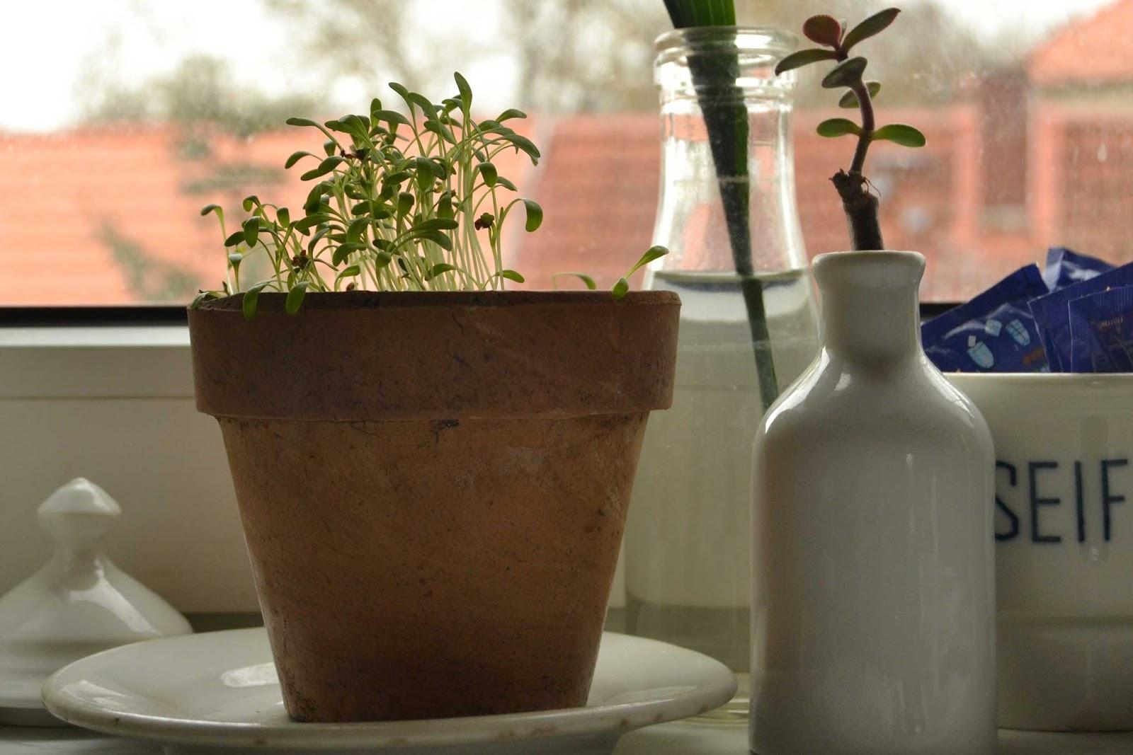 kleiner shabby salon: Küchenblumen und ein Gewinner
