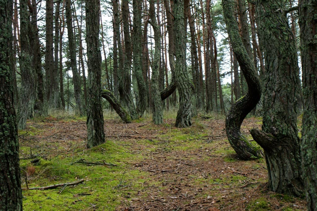 crooked forest facts