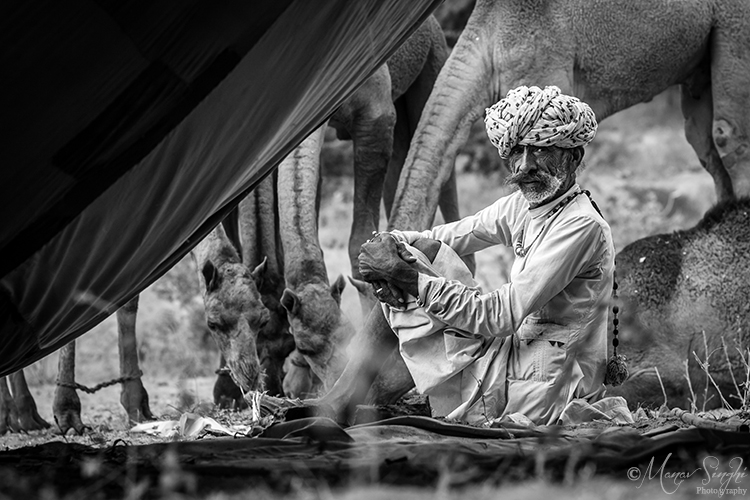Camel trader at Pushkar fair.