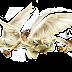 Quantos anjos foram vistos após a ressurreição do Senhor Jesus?