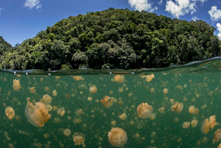 Jellyfish Lake 12