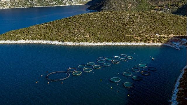 """Διαβούλευση για εγκατάσταση πλωτής μονάδας εκτροφής ιχθύων στον όρμο """"Βουρλιάς"""" στην Ερμιονίδα"""