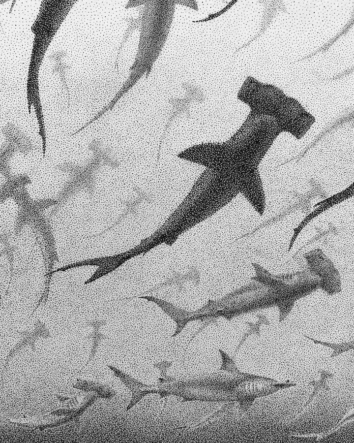 04-Hammerhead-sharks-María-Lecanda-www-designstack-co