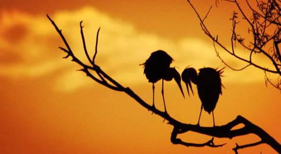 立即終結孤單生活、立即擁有老伴!