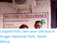 https://sciencythoughts.blogspot.com/2019/06/leopard-kills-two-year-old-boy-in.html