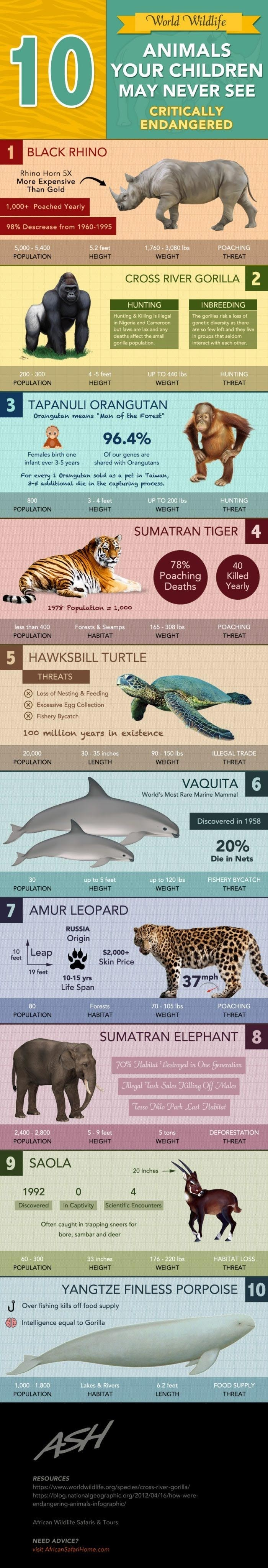 10 Animals Your Children May Never See #infographic