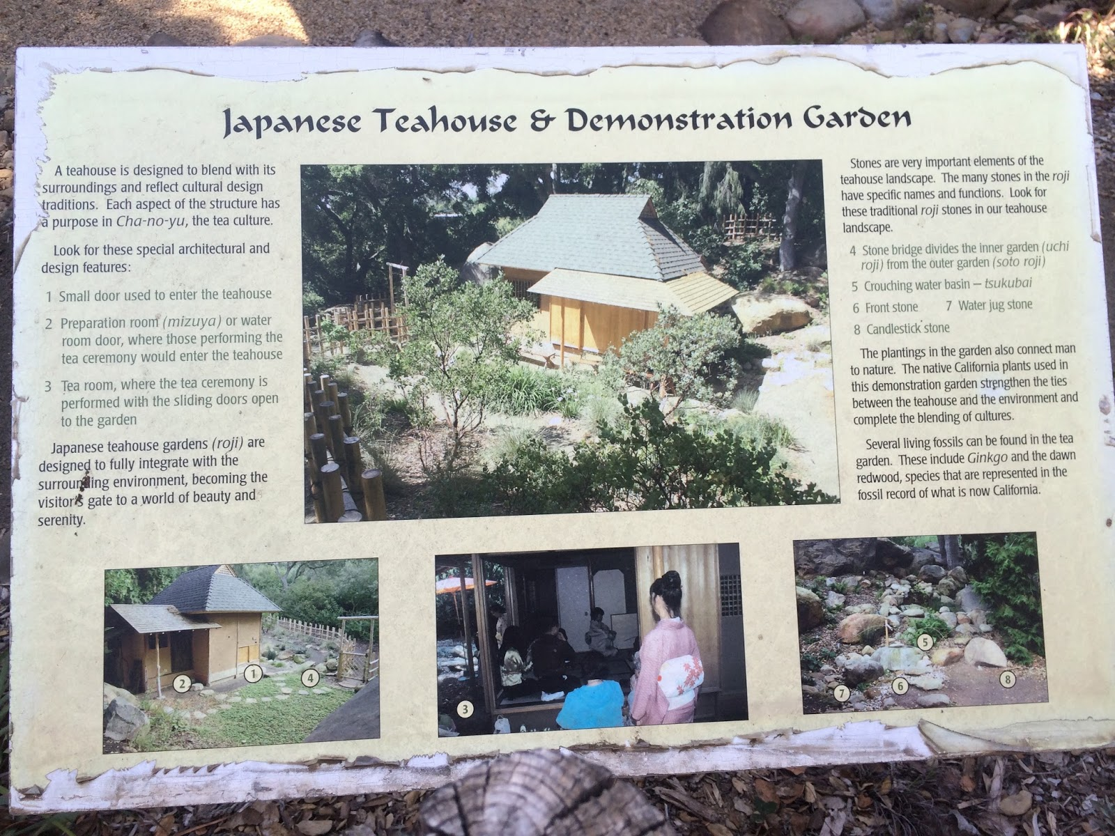 Japanese Style Garden Using California Native Plants
