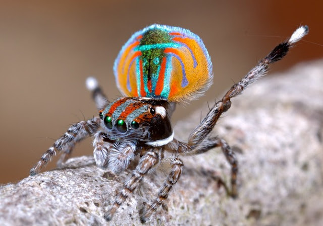 عناكب العالم تأكل في كل عام بين 400 و800 مليون طن من الحشرات
