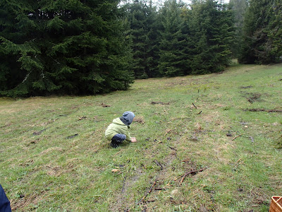 grzyby 2017, grzyby w kwietniu, grzyby wiosenne, smardze na Orawie