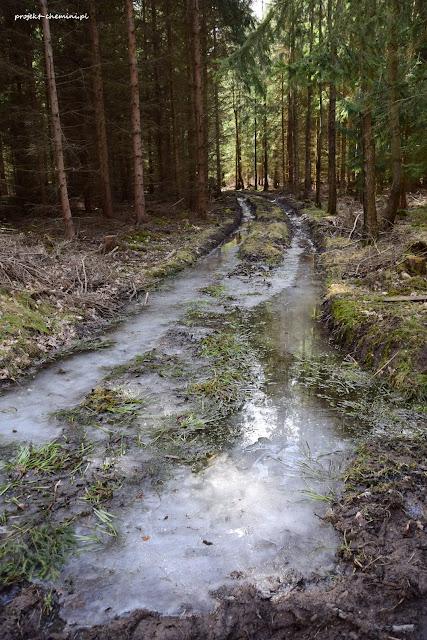 Rozjeżdżone drogi leśne po wycince drzew