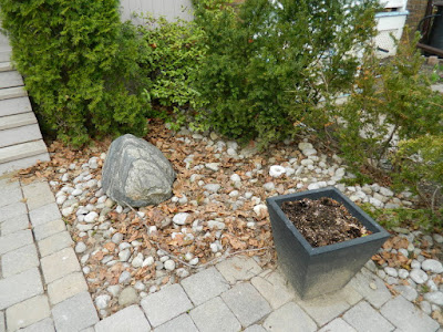 Mount Pleasant East Davisville Front Garden Spring Cleanup before by Paul Jung Gardening Services a Toronto Gardening Company