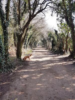 Sunny path between trees