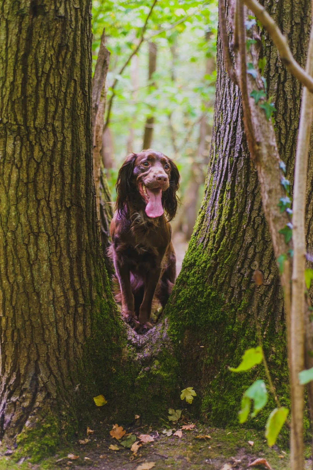 puppies dachshund cocker spaniel tree liquidgrain liquid grain