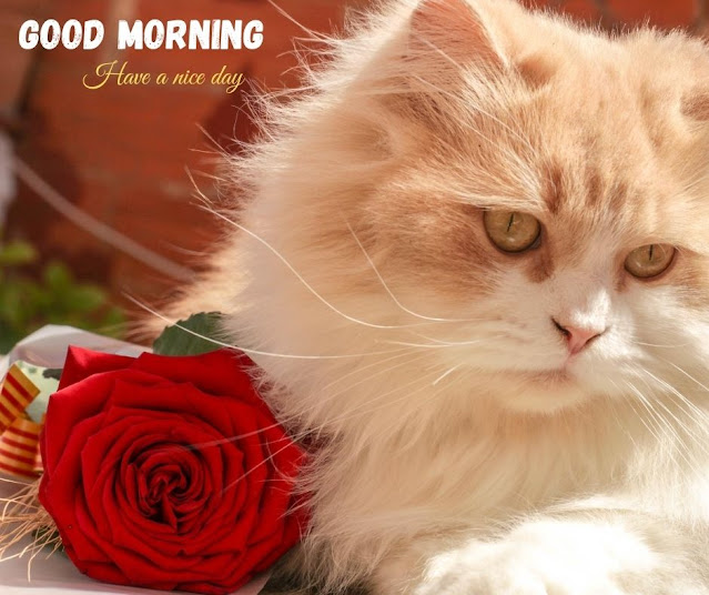 good morning images of flowers
