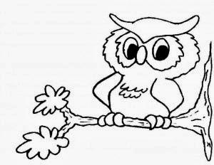 La Chachipedia Dibujos De Búhos Para Colorear Para